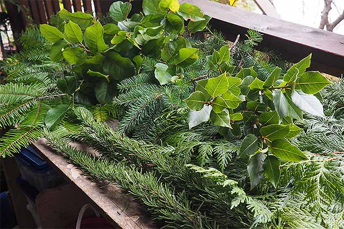 cut a selection of evergreen boughs to make your own holiday swag gardenerspathcom - How To Make A Christmas Swag