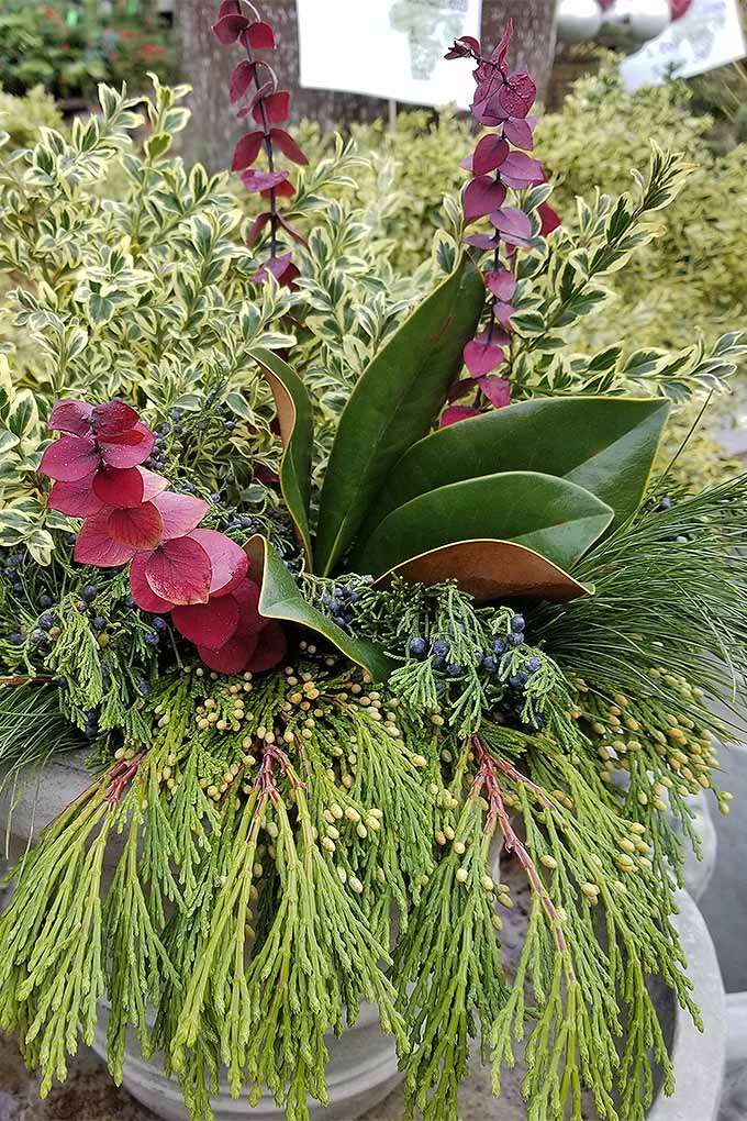 Want to learn how to make your own DIY winter holiday arrangements? You'll love our tutorial: https://gardenerspath.com/how-to/design/diy-winter-decorative-arrangement/ #winter#holiday #decorations #flowerarrangements