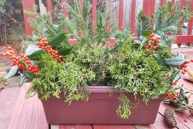 DIY Winter Containers | GardenersPath.com