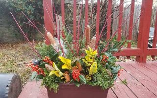 DIY Wintertime Decorative Arrangement Design | GardenersPath.com