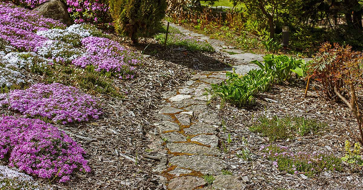 The 15 best flowering ground covers for yard gardeners path mightylinksfo