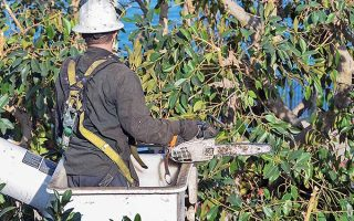 What to Do When the Top of Your Tree Dies