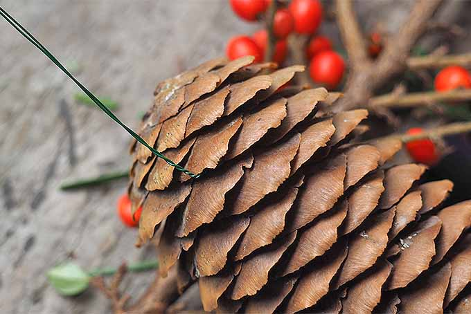 How to Create Holiday Swags from the Garden | GardenersPath.com
