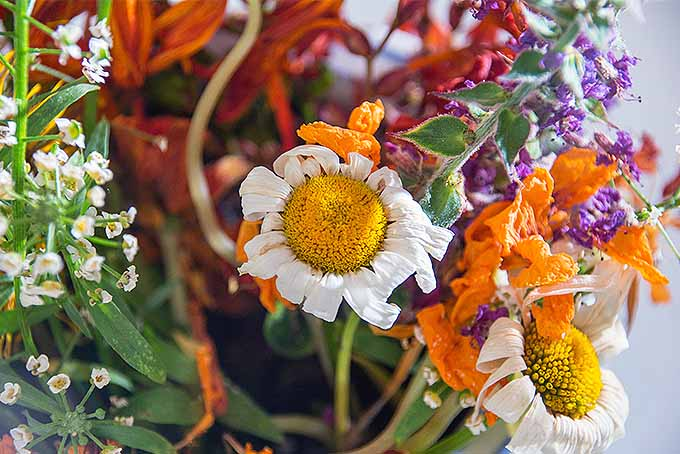 Keep your bouquet from wilting like this one too quickly, with our tips. | GardenersPath.com