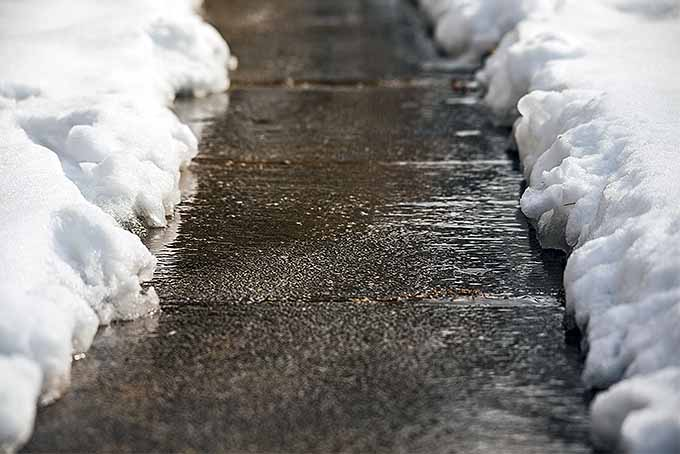 Keep Your Sidewalks Clear with the Best Snowblower | GardenersPath.com