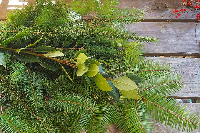Lay Out Boughs in an Attractive Arrangement for this DIY Christmas Swag | GardenersPath.com