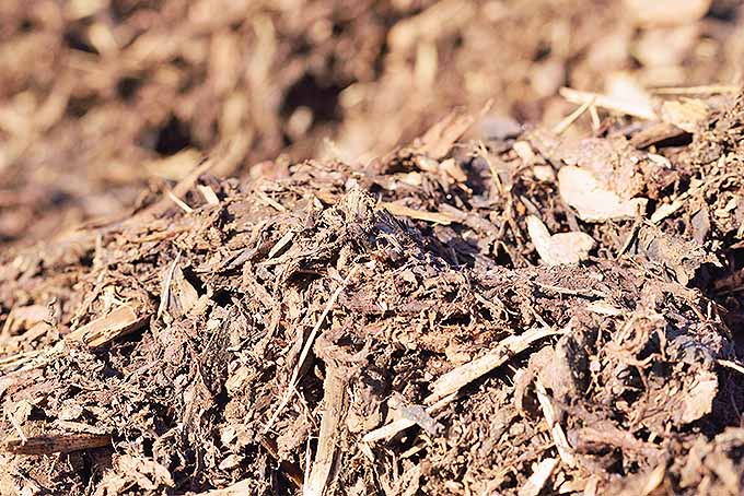 Mulching can help to protect trees from winter cold. | GardenersPath.com
