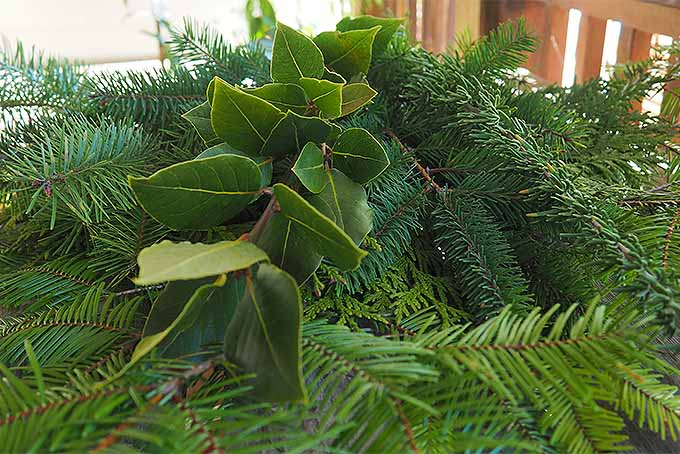 Top with a Layer of Ornamental Boughs | GardenersPath.com