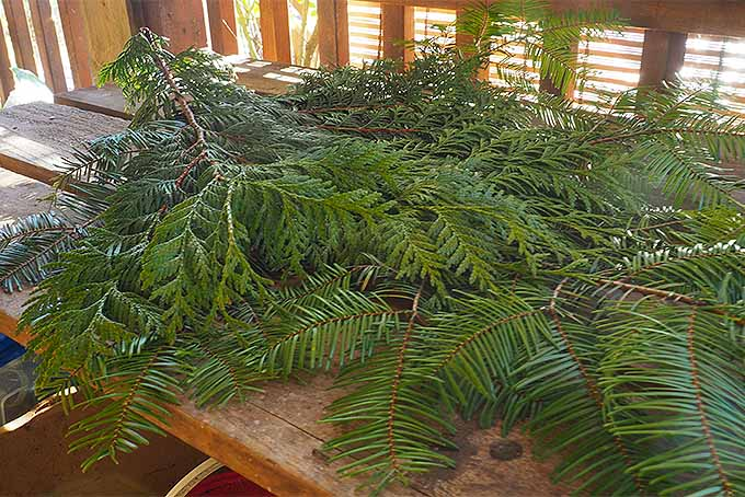 Use Flat Boughs to Create the Bottom Layer of Your Christmas Swag | GardenersPath.com