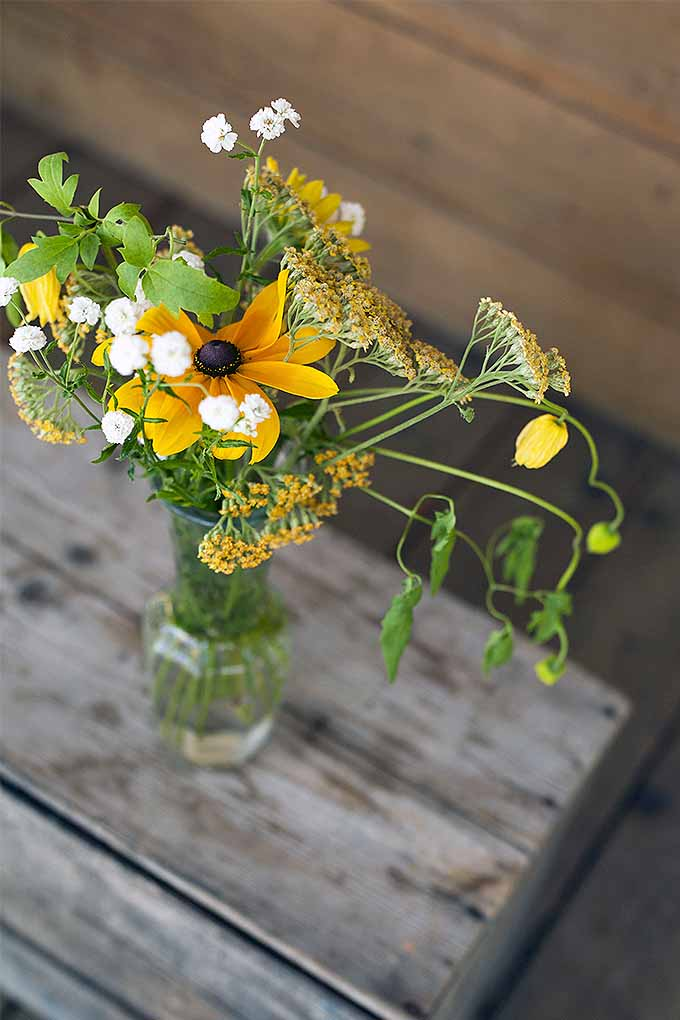 Black-eyed susans make a beautiful addition to the cut flower garden- try our tips to grow them at home: https://gardenerspath.com/plants/flowers/grow-black-eyed-susan/