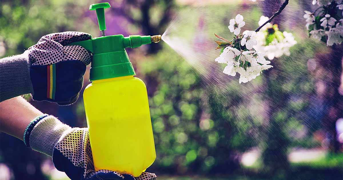 How To Apply Herbicides And Pesticides Safely Gardener S Path