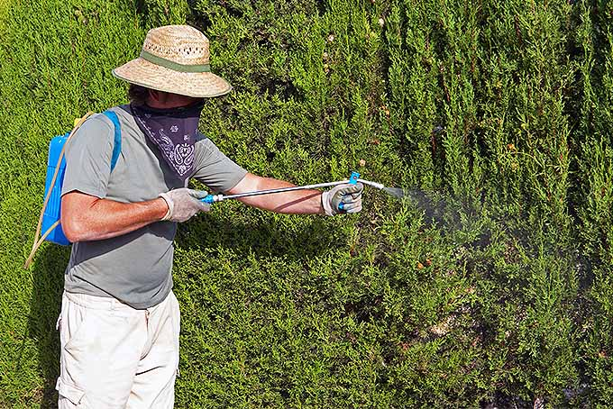 Be sure to exercise caution and wear the appropriate protective gear when applying chemicals in the garden. | GardenersPath.com