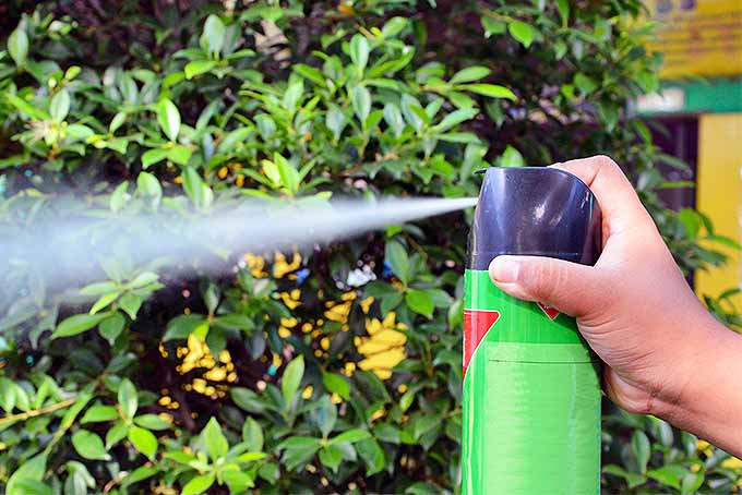 Spraying chemicals in the garden should always be done with safety protocols in mind. | GardenersPath.com