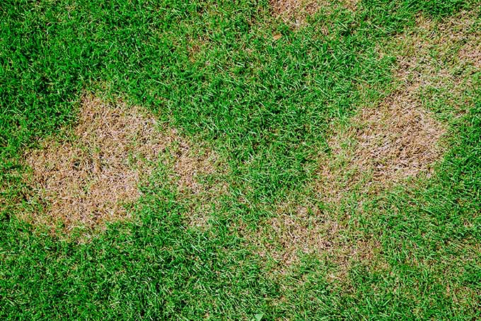 Patchy areas in the lawn can be the result of clumsy chemical application. | GardenersPath.com