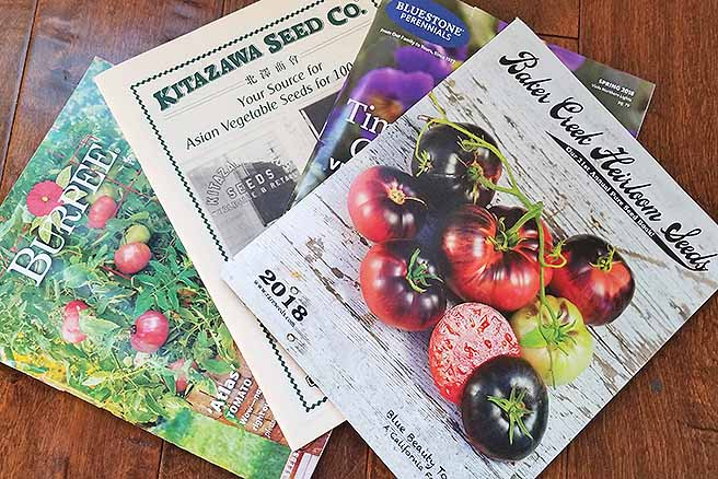 Four catalogs are arranged on a dark wooden table much like that of cards in a players hand. The catalogs are four companies' yearly seed catalogs used to make loyal customers aware of the seeds that they each have to offer. The catalogs from back to front are green, white, purple/green and white. The one on top has a picture of several different tomatoes with some being ripe and others not so much. The tomatoes are black on top and slowly fade to red towards the bottom.