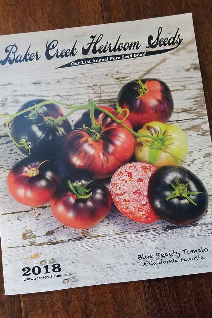 "A Baker Creek Heirloom Seeds catalog resides on a darkly stained wooden table. On the cover of the catalog is the name of the company and a picture of some tomatoes called ""Blue Beauty Tomato"". Some of the tomatoes are attached by the stem that they were grown from. Others are unattached. The tomatoes are dark at the top and fade to fade to red as it gets closer to the bottom. One tomato is sliced in half to show the juicy fruit that it holds within."