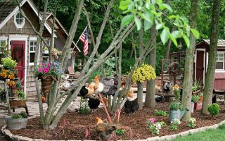 "Laugh Your Way Through Chicken Husbandry with ""The Chicken Chick's Guide to Backyard Chickens"""