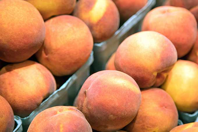 Use homegrown peaches for your next cobbler | GardenersPath.com