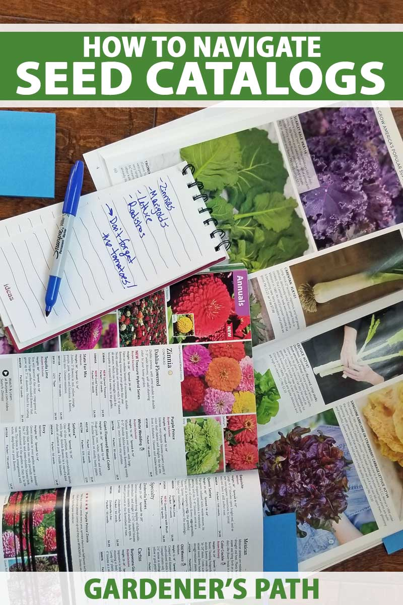 A notepad, pen, and stack of garden seed catalogs.