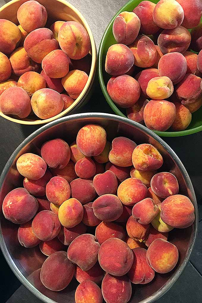 A bountiful peach harvest | GardenersPath.com
