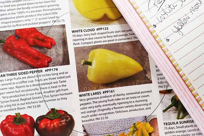 A notepad rests on top of a seed catalog opened to a page full of peppers. On the page is one pepper, the white lakes pepper, that is circled. The yellow pepper's name is also written on the notepad indicating the desired pepper seeds have been found. The page contains red, yellow and orange varieties of peppers.