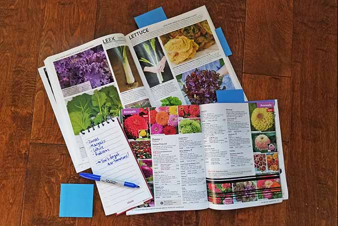 Two seed catalogs rest with one on top of the other. On both of them is a small notepad with crooked red lines and a few notes written in a blue marker that can also be seen. The magazine on top is opened to a page of very bright annual flowers with several written descriptions and prices. On the catalog underneath, the page is opened to the leafy greens such as lettuce, kale and leaks. Also written below every picture is a short description of how to grow and what to expect as well as a price for the seeds. Additionally, there is a stack of post it notes to the side of everything with some notes already marking the pages in the catalogs.