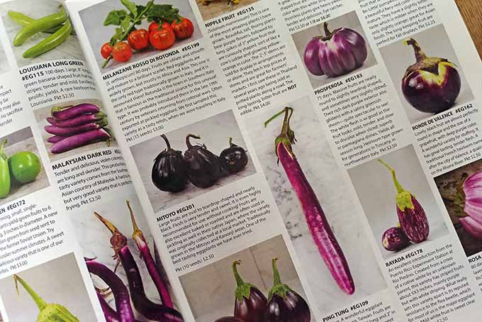 A seed catalog rests opened on a page full of colorful vegetables. This page is focused on those of the purple variety. The vegetables shown are those of the less common and less well-known varieties showing the true capability of what the rare seed catalogs have to offer. The vegetables are shown in a picture with the name and catalog numbers in bold directly underneath. Underneath the name are long descriptions of each variety and the price of a number of seeds.