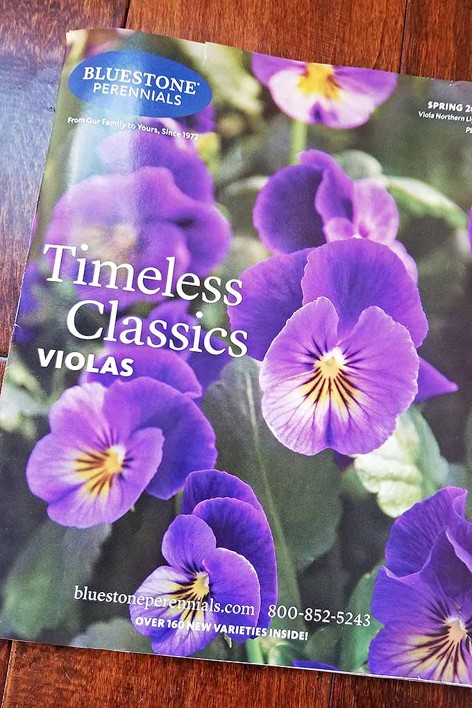 A Timeless Classics Seed catalog rests on a table. On the cover of the catalog are bright purple and yellow violas. The flowers are in full bloom with vibrant greens coming from the petals and stems beyond