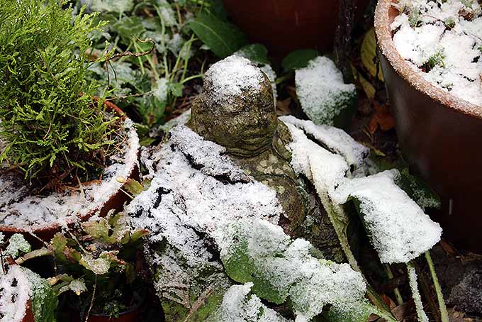 An unexpected snowfall on a garden | GardenersPath.com