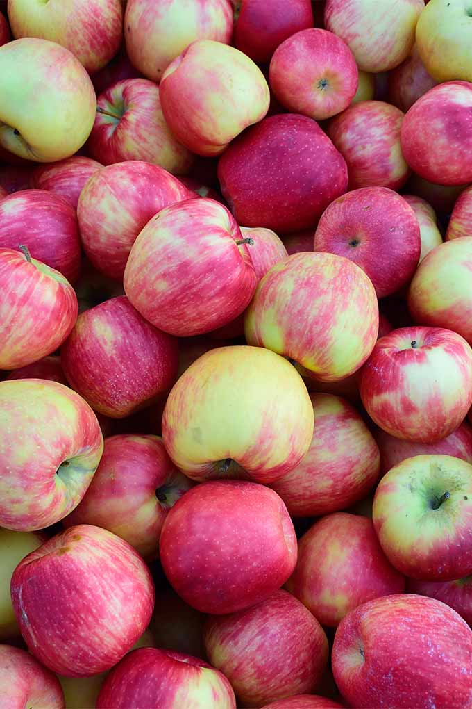 A pile of apples take up the full screen with their bright red and yellow tones on display showing they are ripe and ready to eat.