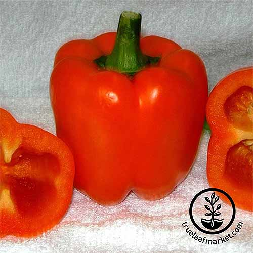 A vibrant orange coral bell pepper with another cut in half to show the inside, on a white cloth.