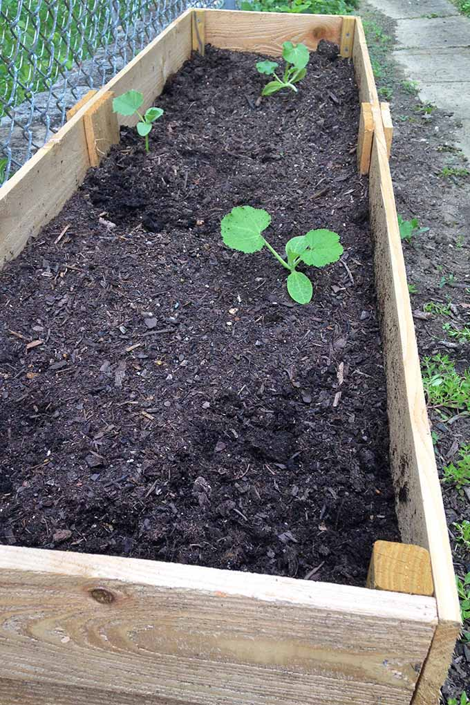 Vertical top-down view of a wooden planting frame filled with dark brown soil, with a few green seedlings growing in the dirt.