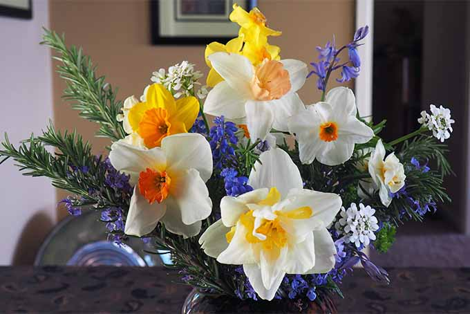 A springtime flower arrangement with yellow, orange, white, and coral-colored daffodils, purple hyacinth, and other types of blooms, and green evergreen foliage, with a beige wall and framed artwork in the background.