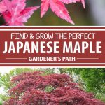 A collage of photos showing different varieties of Japanese maples.