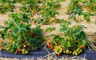Juicy and Sweet Tips for Starting Your Own Berry Patch