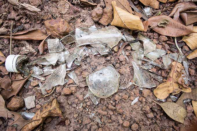 A broken bottle litters the forest floor, among dirt and dry, brown leaves.