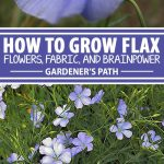 A collage of photos showing off flax flowers.