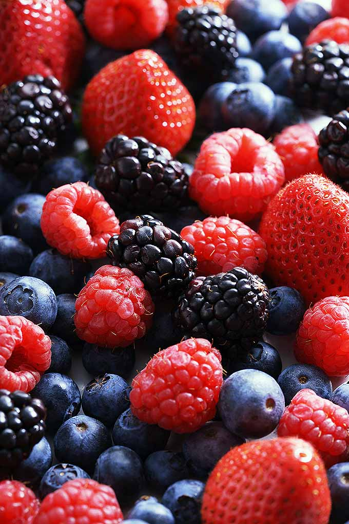 A mixture of small berries with bright colors resting in a pile. There are blueberries, blackberries, strawberries and raspberries in the fruit assortment.