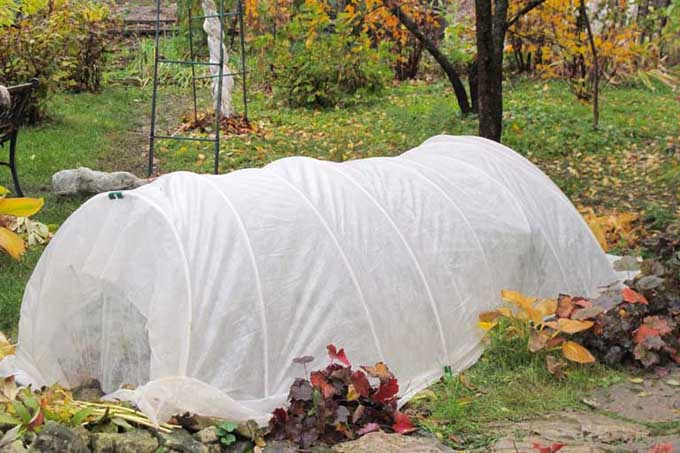 A small hoop house covered in white garden cloth provides frost protection for chilly autumn and spring mornings.