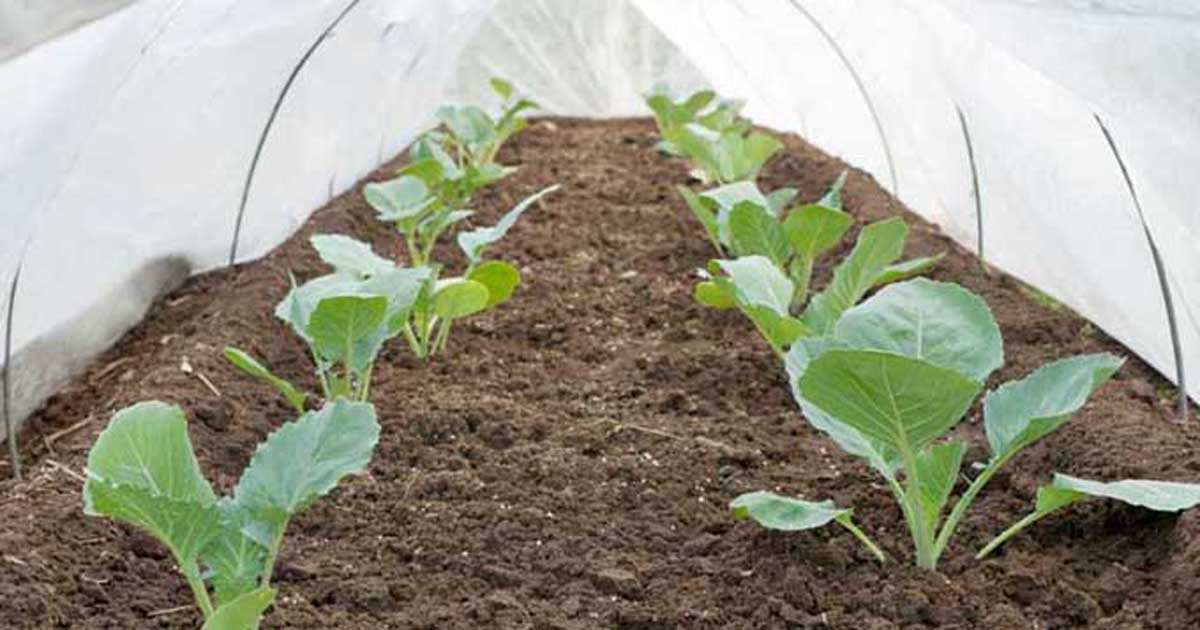 How To Use Floating Row Covers For Season Extension Amp Pest