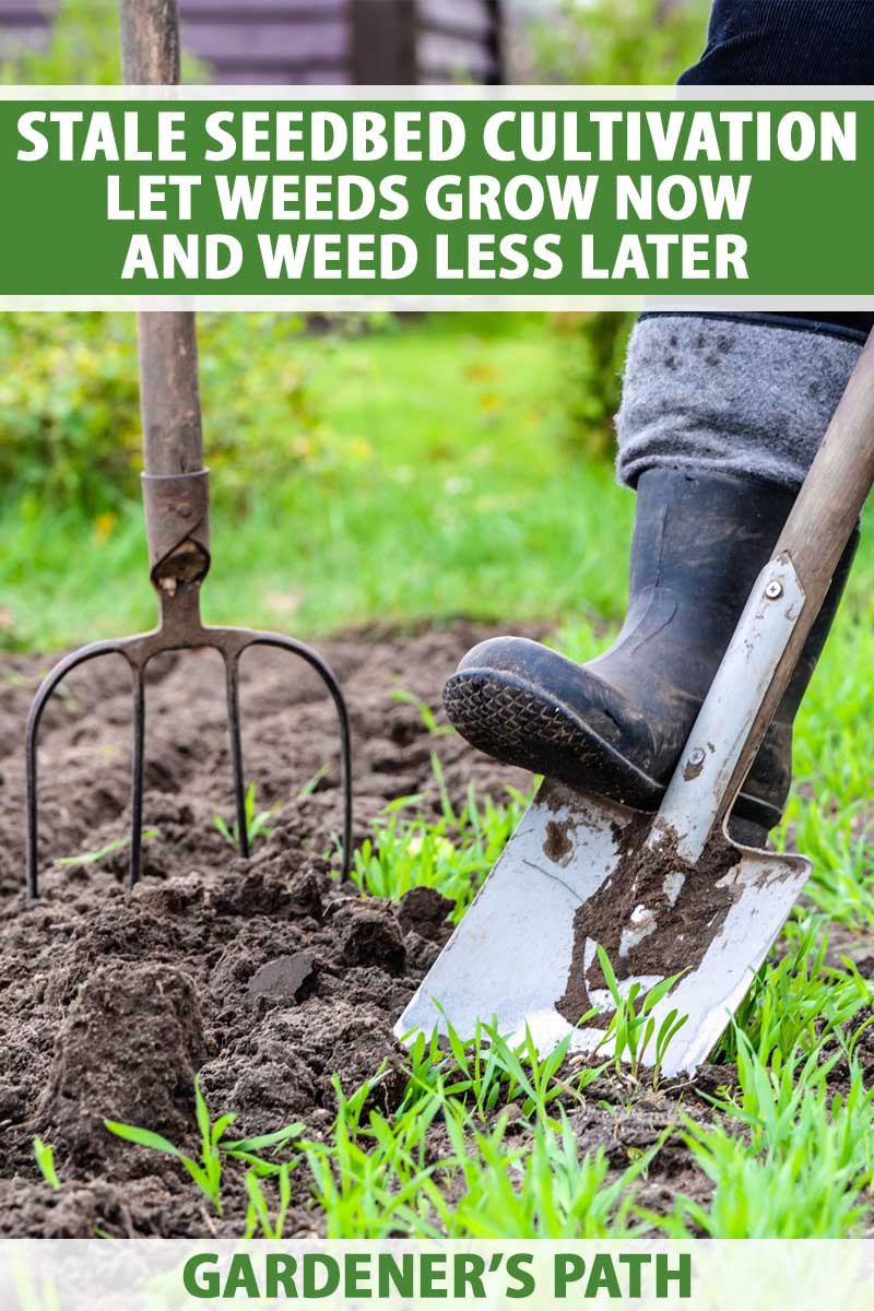 A gardener holding a tile spade and potato fork.