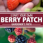 A collage of photos showing different types of berries growing inside of a garden patch.
