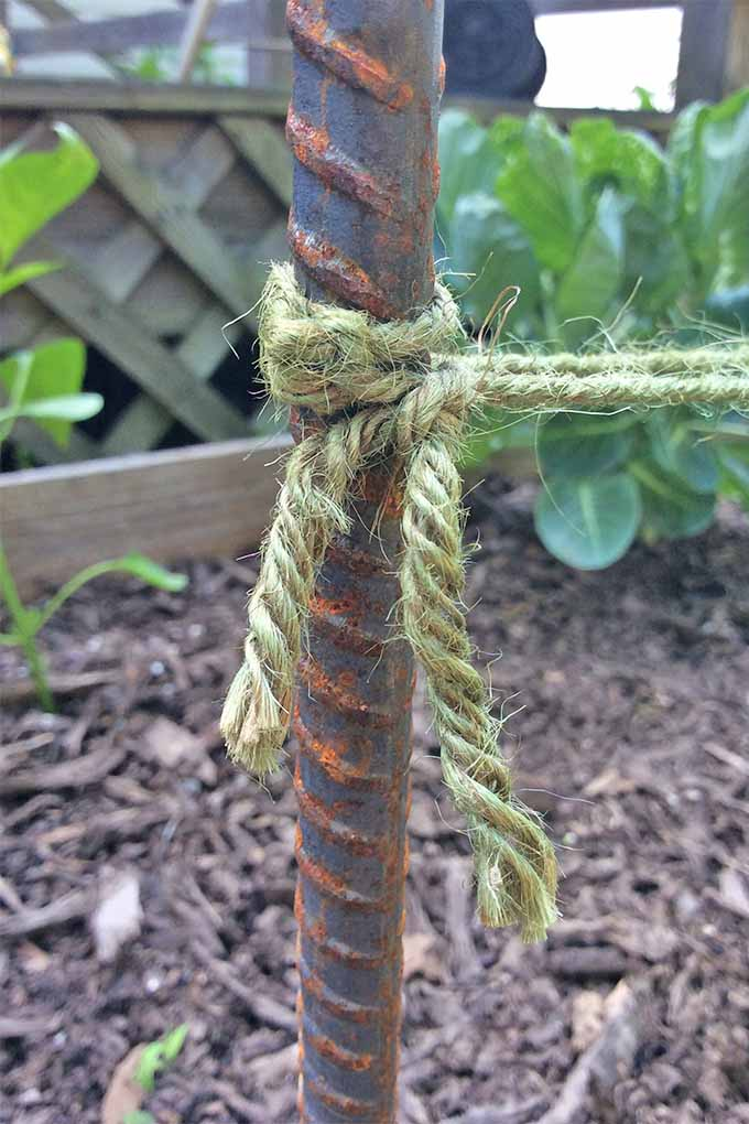 A rusty metal rebar stake standing vertically in a brown soil in a wood garden planter, with a piece of twine tied around it, with plants and a wooden deck in the background, and wood mulch on top of the soil.