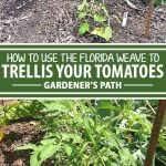 """A collage of pins showing different views a """"Florida weave"""" tomato trellis."""