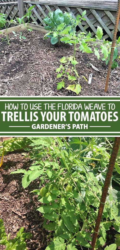 "A collage of pins showing different views a ""Florida weave"" tomato trellis."