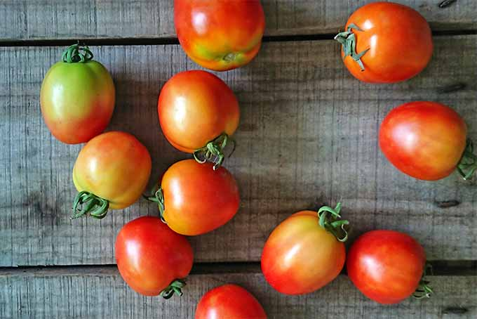 Eleven nearly-ripe cherry tomatoes with a mixture of red, green, and yellow skins and green tops, scattered on a brown wooden surface.