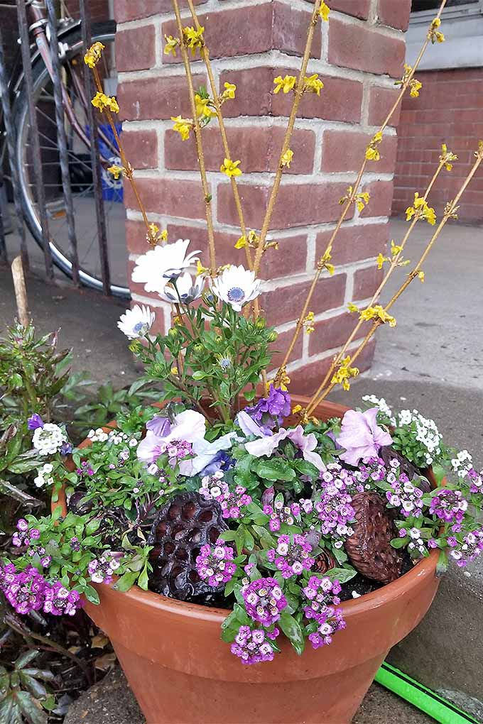 A springtime garden pot filled with daisies, pink flowers, dried lotus pods, and forsythia branches, in front of a brick column on a cement porch with a bicycle parked behind the planter and in front of the apartment door.