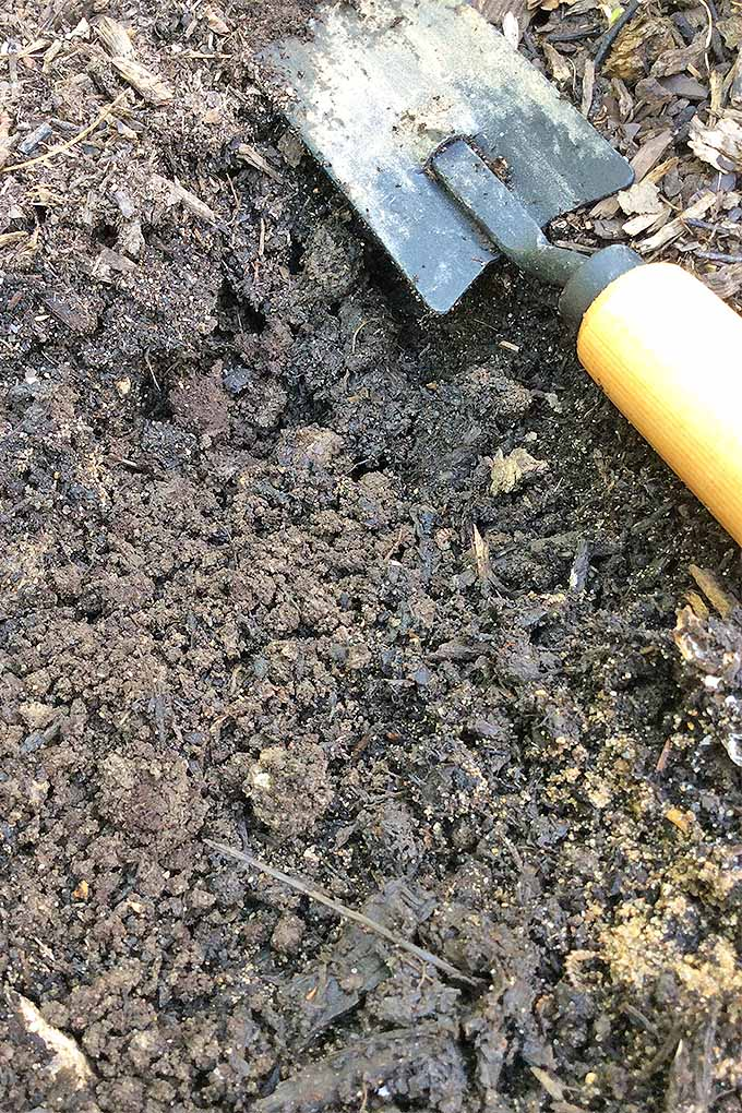 A dirty handheld spade is sitting on top of the soil of a garden. The dirt is very moist and contains sand suggesting it is of the loam variety.
