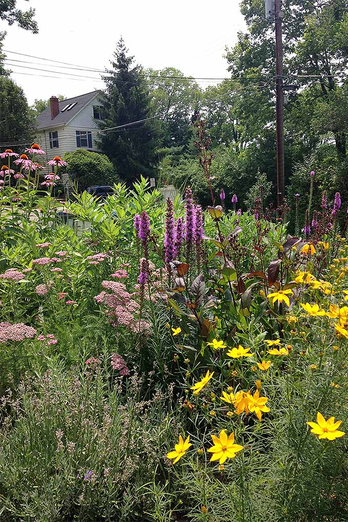 Groups of flowers with yellow, purple, pinks and orange are all growing in rows in a perennial garden. The blooming plants all reach high off of the ground beyond all else, with a telephone pole, power lines, and a house in the background.