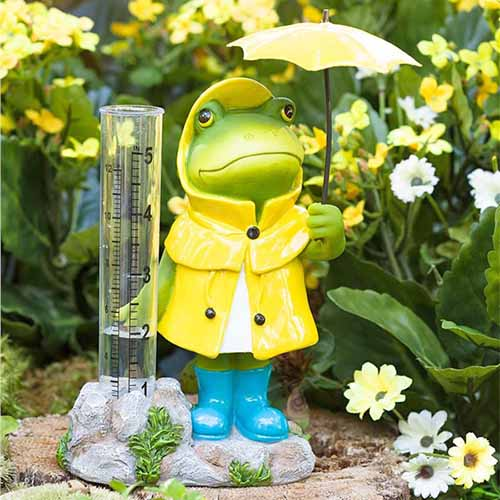 Square closeup image of a decorative rain gauge with a resin green frog wearing a yellow rain coat and yellow boots, and holding a yellow umbrella, with yellow flowers and green foliage in the background.